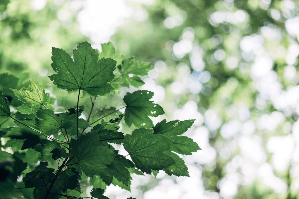 Se mettre au vert dans l'Eure
