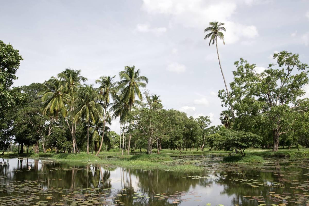 Sri Lanka : Tous mes conseils pratiques
